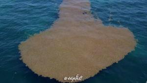 El tercer mar de los sargazos